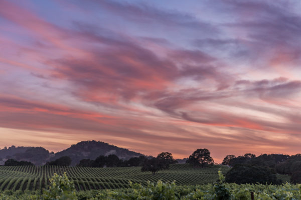 Alexander Valley Sunset - Standard Res (1 of 1)