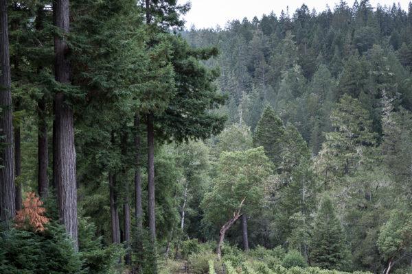 Anderson Valley Vineyard Path - Standard Res (1 of 1)