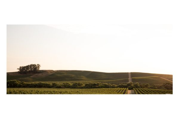 Carneros in August