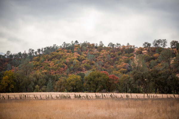 Chiles Valley Autumn Brush (1 of 1)