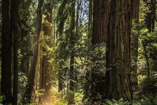 Muir Woods test (1 of 1)