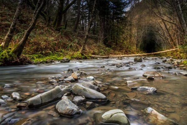Muniz Creek - Low Res (1 of 1)