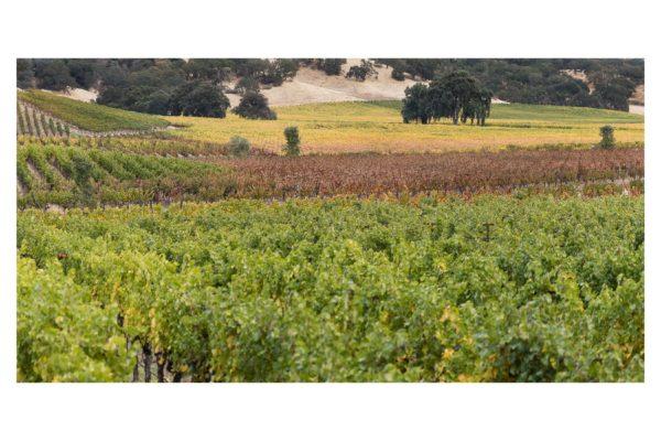 Pope Valley Autumn - White Border