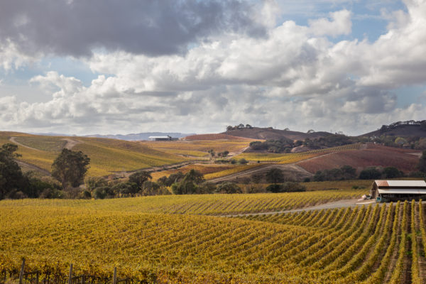 Golden Landscapes of Napa Valley (1 of 1)