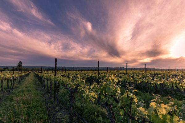 Vine Ridge Sunset 04.18.18 (1 of 1)