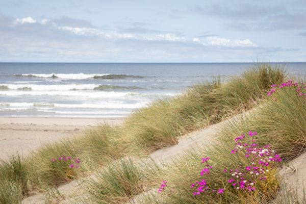 Dunes and wild flowers - Sonoma Coast May 2018 - Web Size (1 of 1)