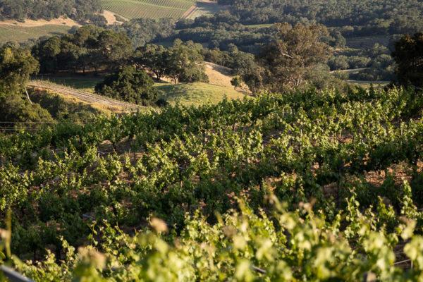 Amizetta Winery (57 of 121)