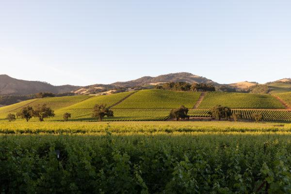 Kenwood Hills - Web Size (1 of 1)
