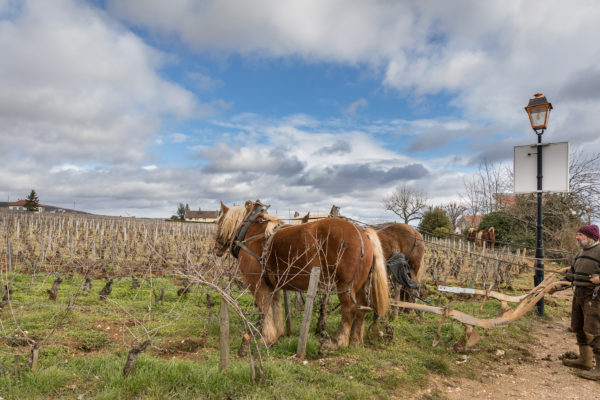 France 2018 - Burgundy (180 of 264)