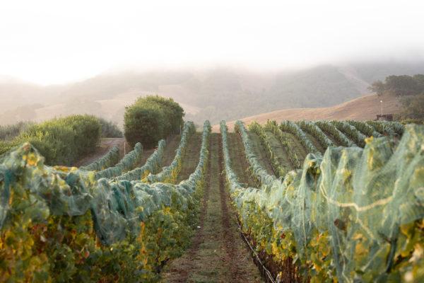 Darling Wines - Petaluma Gap Harvest 2018 - Small Size (69 of 91)