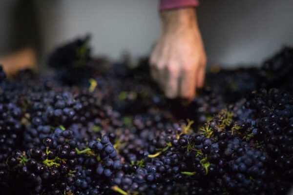 Darling Wines - Petaluma Gap Harvest 2018 - Small Size (24 of 91)