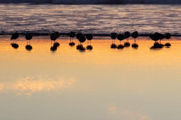 Carmel Birds Part 2 - Web Size (1 of 1)