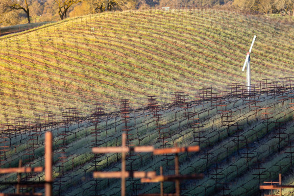 Lucunda Vineyards - Winter Sunrise - March 2019 - Web Size (10 of 40)