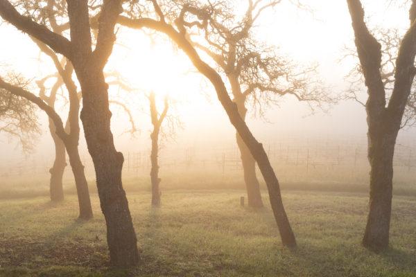 Lucunda Vineyards - Winter Sunrise - March 2019 - Web Size (23 of 40)