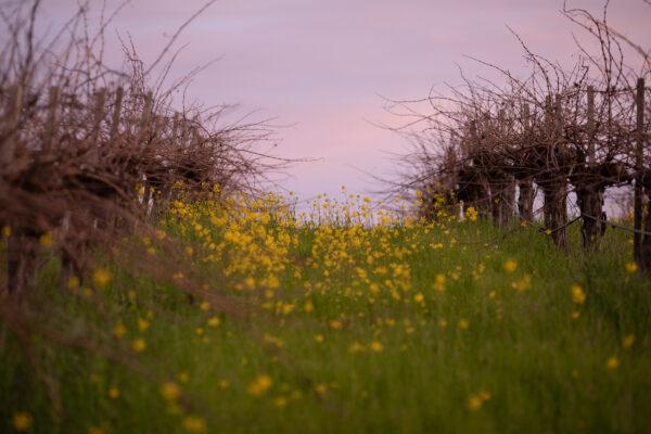 Truchard - February Sunrise (10 of 40)